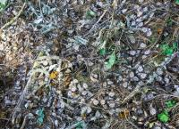 Dead Monarch Butterflies Among Storm Debris