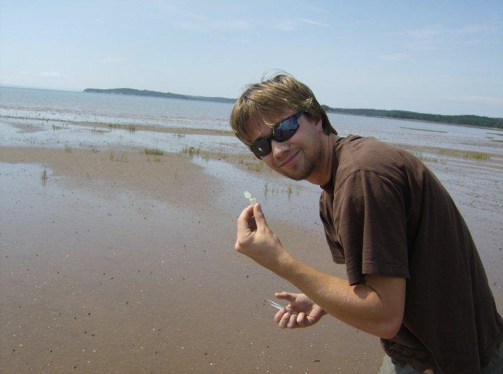 Collecting Shorebird Feces