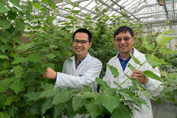 Brookhaven Lab plant scientists