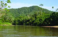 Rare Amazonian Butterfly Named After British National Treasure Sir David Attenborough (2/3)