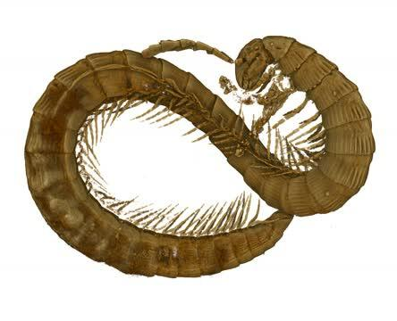 3D Reconstruction of the Millipede