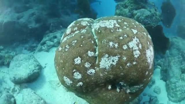 Underwater Video at Looe Key in the Lower Florida Keys (1988 to 2019)