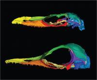 New Species Belongs to Genus Originally Misidentified as Bird