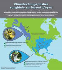 Climate Change Pushes Songbirds, Spring Out of Sync