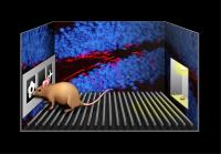 Newborn Brain Cells Show the Way (2 of 2)