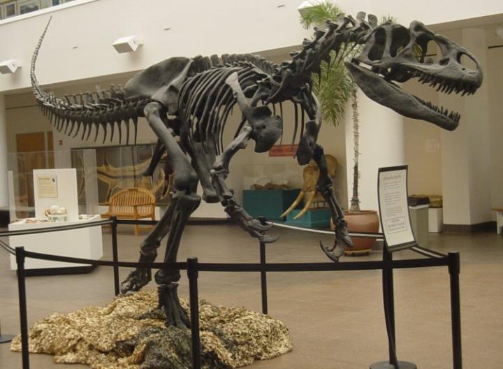 <em>Allosaurus fragilis</em>
