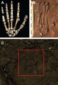<em>Homo naledi</em> Hand Scan