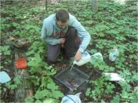 Sampling Earthworms