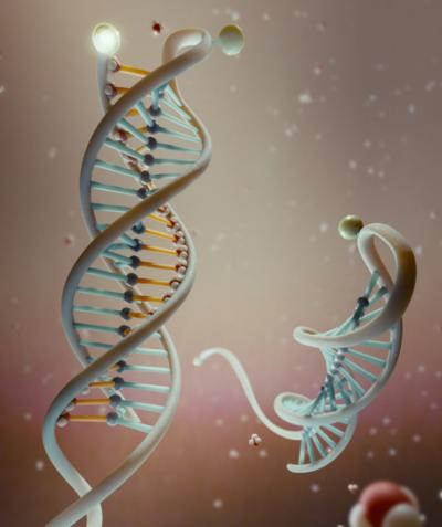 Researchers Use DNA to Build Tool
