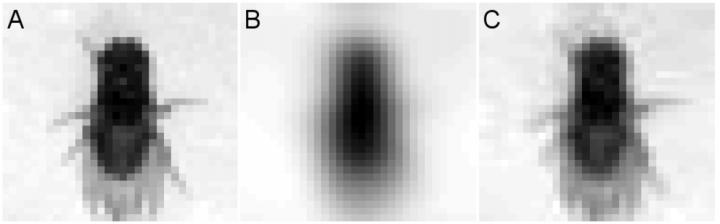 How Blurry is a Fly's Vision?