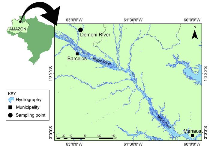 Demeni River, left bank tributary of Negro River, Amazonas State, Brazil