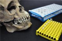 Skulls in Lab