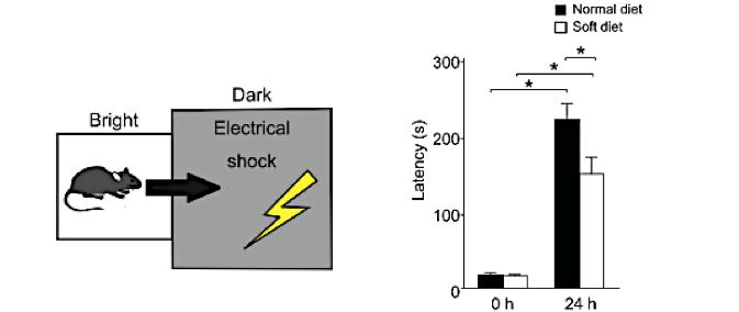 Image1 Evaluation of Memory and Learning Function