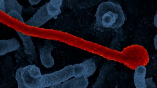 Study Tests Ebola Vaccines