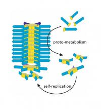 Proto-metabolism in artificial life