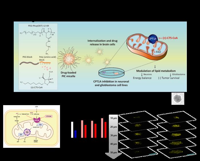 Poly-ion complex micelles improve internalization of lipid metabolism modulators in brain cells