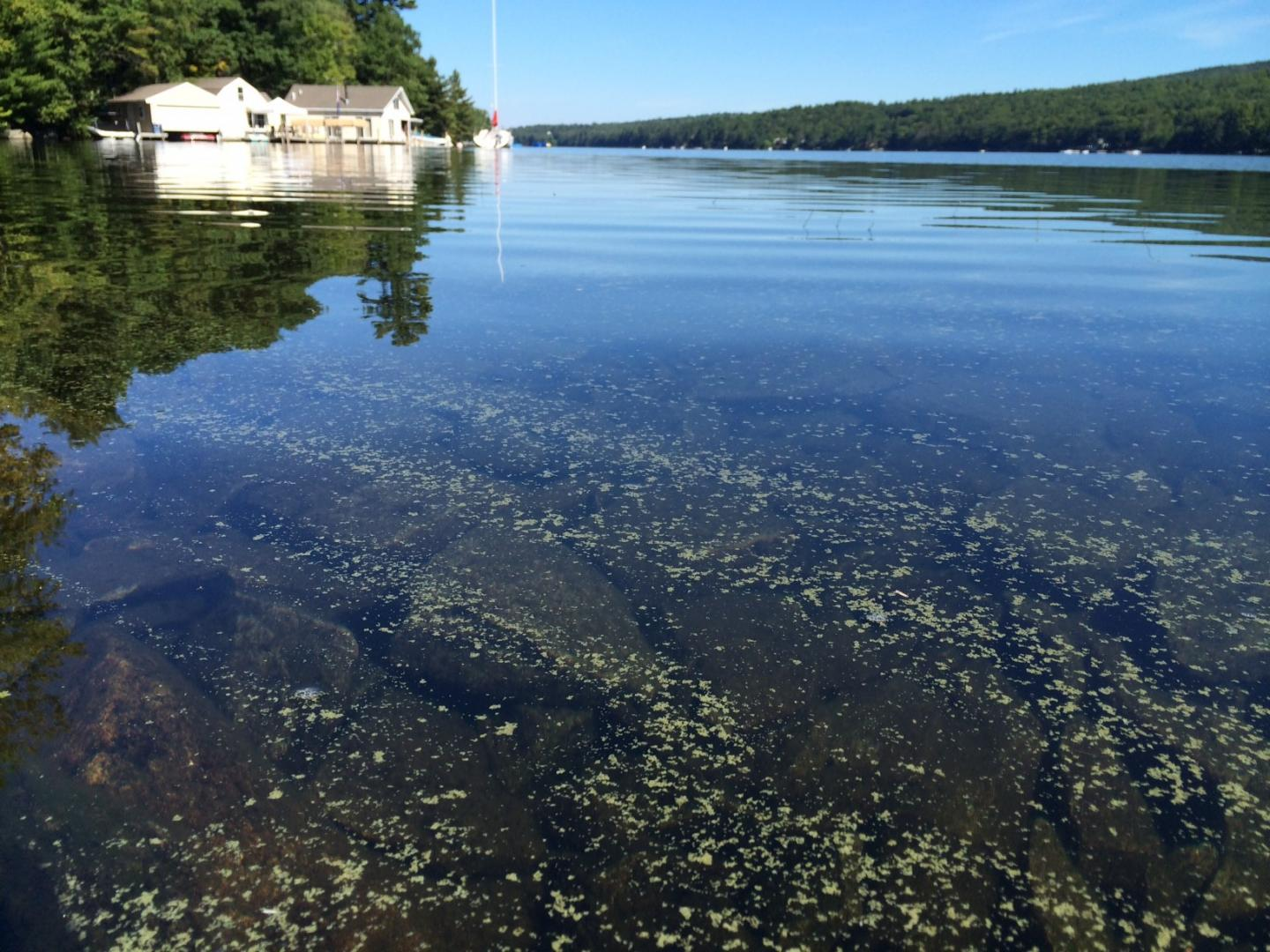 A Cyanobacterial Bloom on the Surface of Lake Sunapee, N.H.