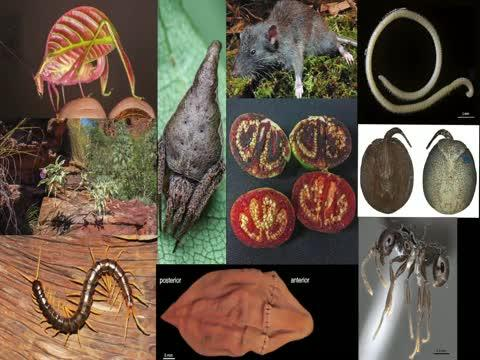 ESF Top 10 New Species for 2017