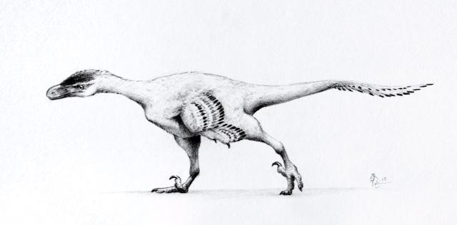 Small Dromaeosaur