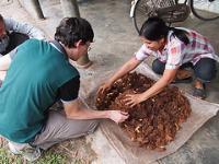 Farmed Palm Weevils