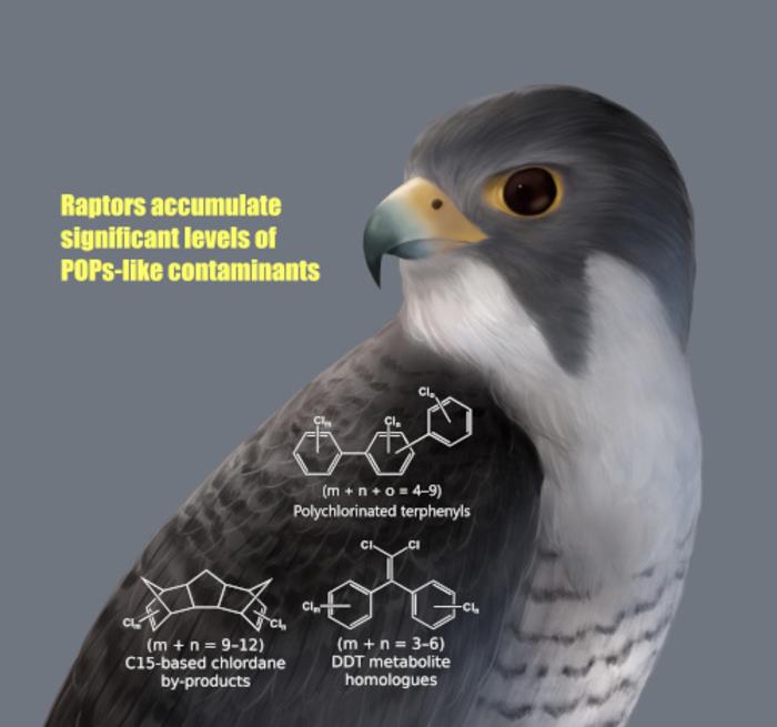 Accumulation of POPs-like contaminants in raptors