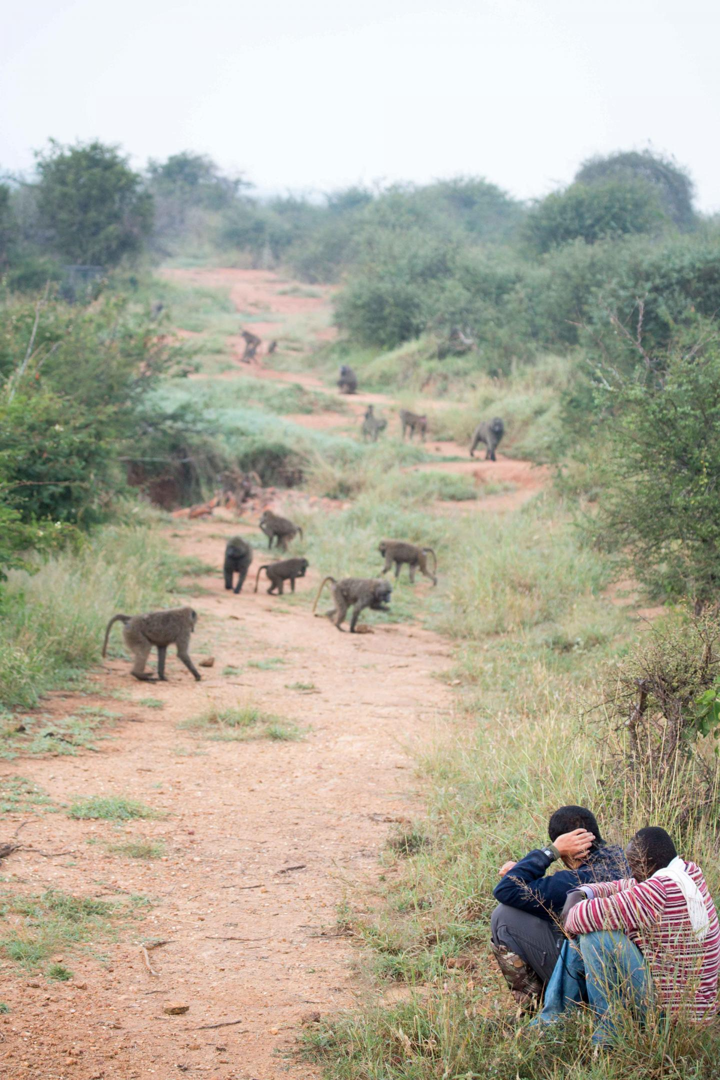 Field Biologists with Baboon Troop