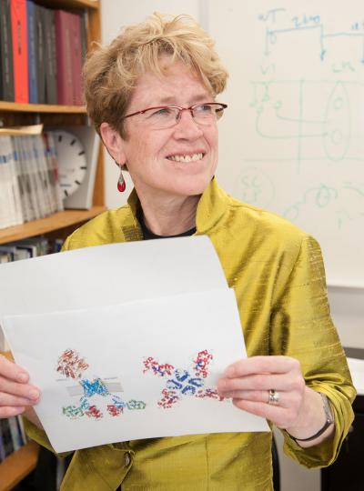 Jeanne Nerbonne, Washington University School of Medicine