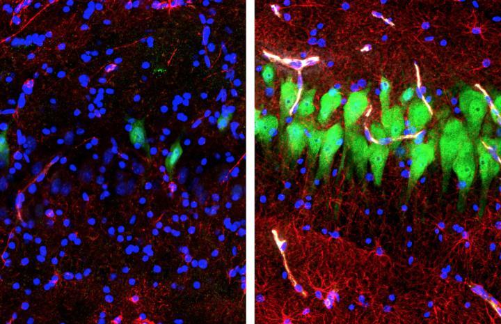 BrainEx Cellular Effects