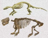 Fig. 2. Skeletons of Chinese Pangolin (<i>Manis pentadactyla</i>) (top) and <i>Ernanodon antelios</i