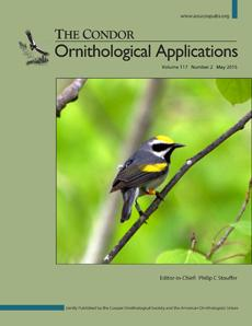 A Golden-Winged Warbler on the Cover of <i>The Condor: Ornithological Applications</i>
