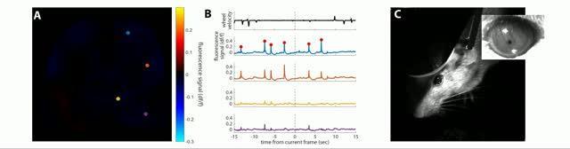 Epilepsy in Lab Mice