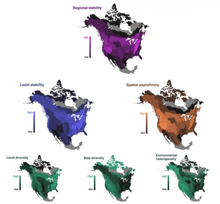 Bird Stability Maps