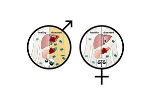 Ein Protein ist Ursache für schwereren Verlauf von Krebserkrankungen bei Männern