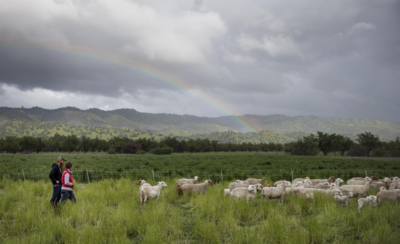 Sheep Farmers on Rangeland