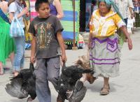 Boy with Turkeys in Oaxaca Today