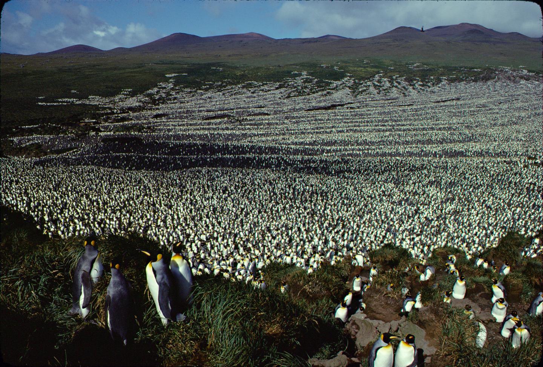 Colony 1982