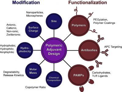 Polymeric Adjuvant Design