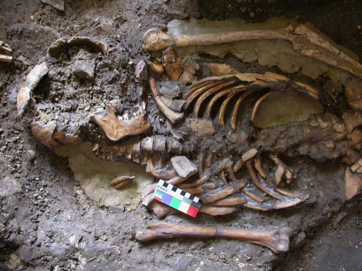Kotias Skeleton
