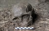 Skull of Qihe 2, a ~8,400-year-old individual from Qihe Cave, Fujian, China