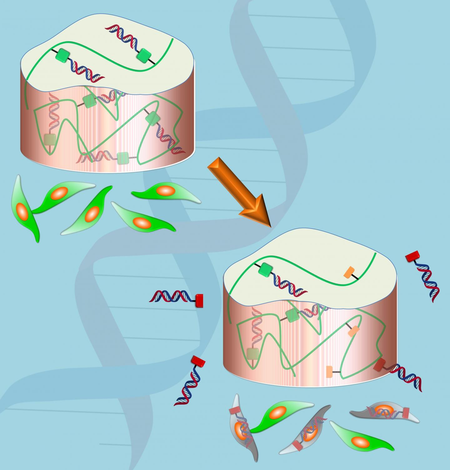 High Tech Gel Aids in Delivery of Drugs