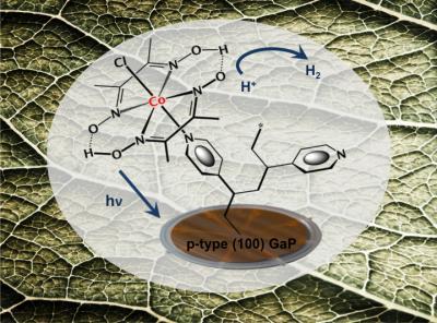 Cobaloxime Catalyst for Solar Fuel