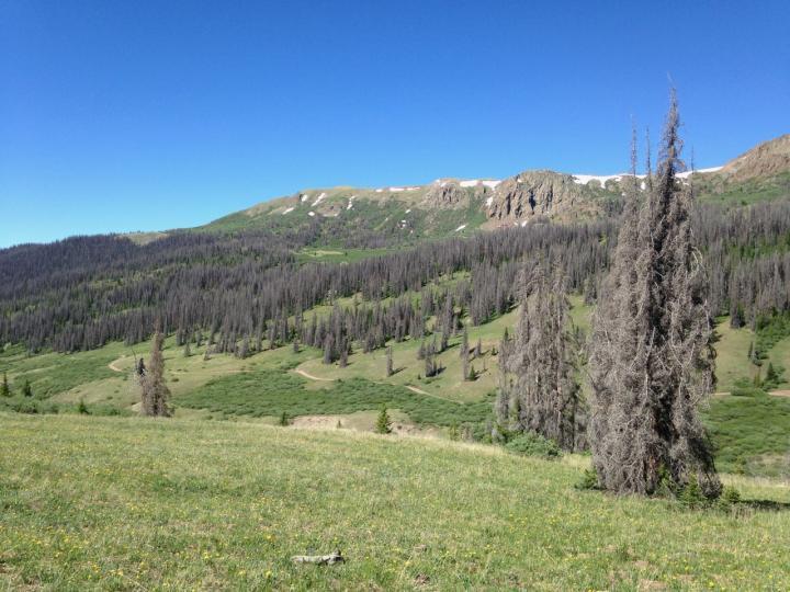 Trees Killed by Bark Beetles