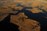 Study Emphasizes Importance of Conserving Coastal Ecosystems
