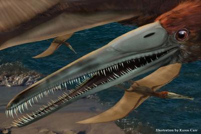 New Genus and Species of Flying Reptile <I>Aetodactylus halli</I>