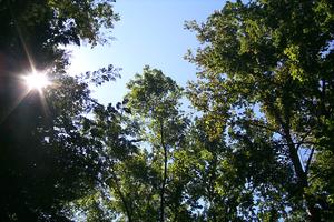 Photo of tree canopy