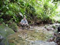 UGA Study Reveals Ecosystem-Level Consequences of Frog Extinctions (3 of 3)
