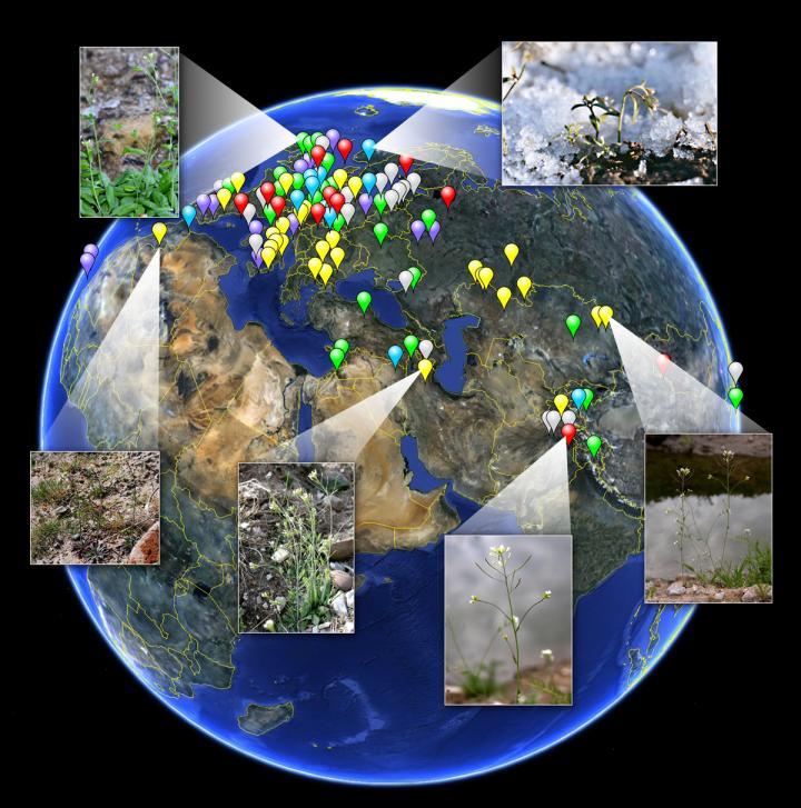 Population Genetic and Epigenomic Diversity of <i>Arabidopsis</i>