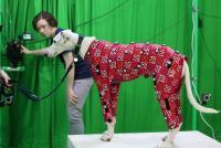 Dog Motion Capture