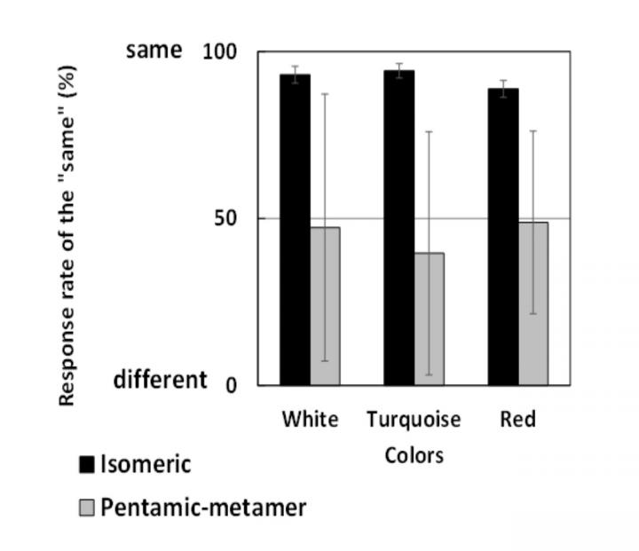 Comparison of results for isomeric and pentamic-metamer conditions