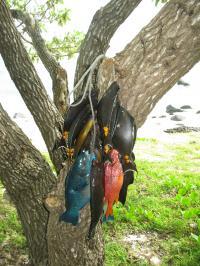 Catch Landed during a Periodic Harvest in Vanuatu